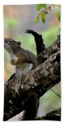 Talking Squirrel Beach Towel