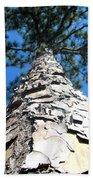 Tall Pine Tree In Summer Beach Towel
