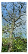 Tall Tree Beach Towel