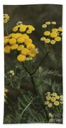 Tansy Blossoms Beach Towel