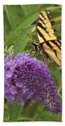 Tattered Tiger Swallowtail Butterfly          August         Indiana Beach Towel
