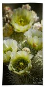 Teddy Bear Cholla-cylindropuntia Bigelovii Beach Towel