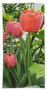 Tender Tulips Beach Towel