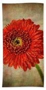 Textured Red Daisy Beach Sheet