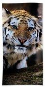 That Tiger Look Beach Towel