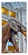 The African Bush Elephant In The Rotunda Of The National Museum Of Natural History Beach Towel