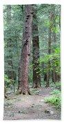 The Ancient Hemlock Forest Beach Towel