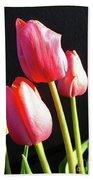 The Appearance Of Spring - Tulips Beach Towel