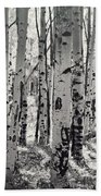 The Aspen Forest In Black And White  Beach Towel