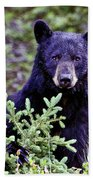 The Black Bear Stare Beach Towel