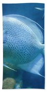 The Blue Angel Beach Towel