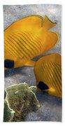 The Bluecheeked Butterflyfish Beach Towel