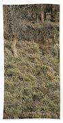 The Bull Elk Beach Towel