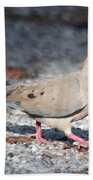 The Chipper Mourning Dove Beach Sheet