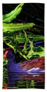 The Common Gallinule Beach Towel
