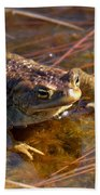 The Common Toad 1 Beach Towel
