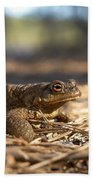 The Common Toad 4 Beach Towel