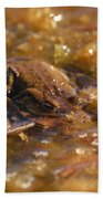 The Common Toads 2 Beach Towel