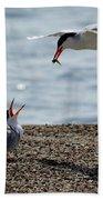 The Courtship Feeding - Series 1 Of 3 Beach Towel