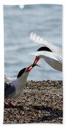 The Courtship Feeding - Series 2 Of 3 Beach Towel