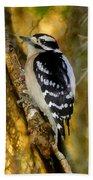 The Downy Woodpecker Beach Towel
