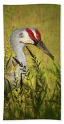 The Duo - Two Sandhill Cranes Beach Towel