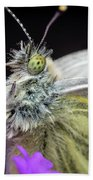 The Eye Of The Green-veined Butterfly. Beach Towel