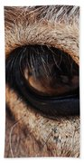 The Eye Of A Burro Beach Towel