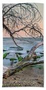 The Fallen Tree Beach Towel