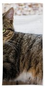 The Ferals-1412 Beach Towel