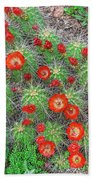 The First Week Of May, Claret Cup Cacti Begin To Bloom Throughout The Colorado Rockies.  Beach Towel