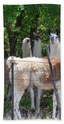 The Five Llamas Beach Towel