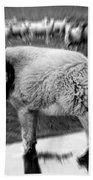 The Flock Is Safe Grayscale Beach Towel