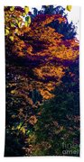 The Forest At Dusk Beach Towel
