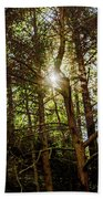 The Forest Sun Beach Towel