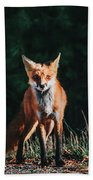 The Fox Beach Towel