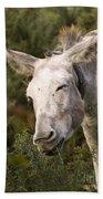 the Funny Donkey Beach Towel