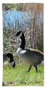The Geese Are Back Beach Towel