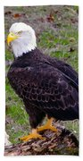 The Great Bald Eagle Beach Towel