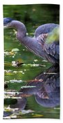The Great Blue Heron Hunting For Food Beach Towel
