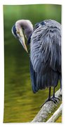 The Great Blue Heron Perched On A Tree Branch Preening Beach Towel