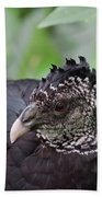 The Great Curassow 3 Beach Towel