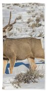 The Gtnp Mule Deer Buck Beach Towel