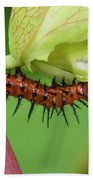 The Gulf Fritillary Caterpillar  Beach Towel