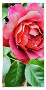 The Hot Cocoa Red Rose Beach Towel