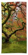 The Japanese Maple Tree In Spring Beach Towel