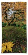 The Japanese Maple Tree In Autumn 2016 Beach Towel