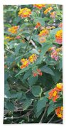 The Lantana In The Near 20 Beach Towel