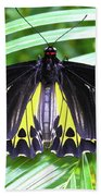 The Largest Butterfly In The World Beach Towel