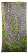 The Lavender Outside Her Window Beach Towel